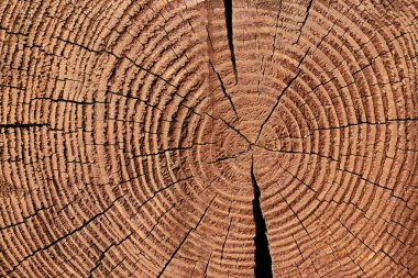 full frame of wooden stump texture as backdrop