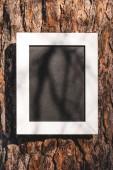 Fotografie prázdné tabule na kůře stromu v parku