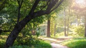 empty pathway in park with green trees and sunlight