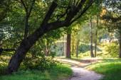 prázdná cesta v parku se zelenými stromy a rostlinami a okolí