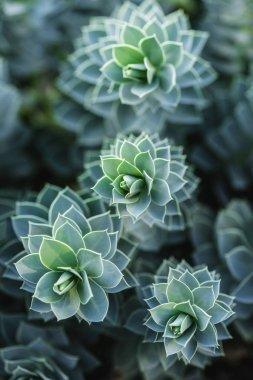 parkta güzel succulents seçici odak