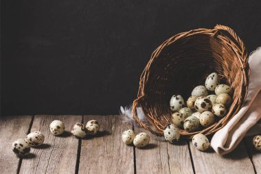 fresh organic quail eggs in wicker basket and feathers on wooden table on black