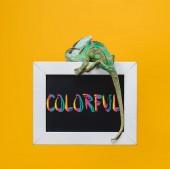 a tábla a színes szimbólum elszigetelt, a sárga világos egzotikus kaméleon