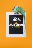Photo beautiful colorful reptile on blackboard with 40 percents - autumn sale isolated on yellow