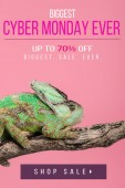 Fotografia bella esotica camaleonte seduto sul ramo di albero isolato sul colore rosa con cyber lunedì mai lo shopping