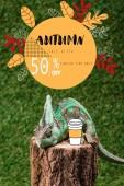 Fotografie Chameleon na pařezu s kávou na zelené trávě s podzimní prodej