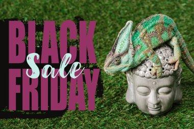 beautiful bright green chameleon sitting on Buddha head with black friday sale