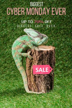 beautiful bright green chameleon climbing on stump with sale tag and cyber monday ever