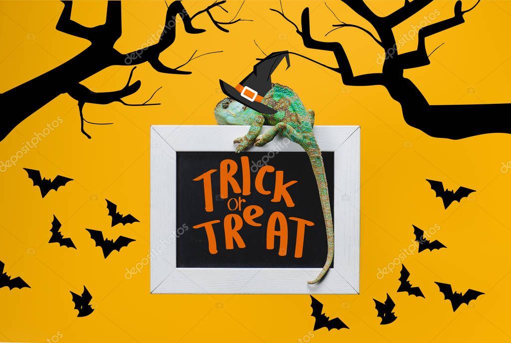 Exotic chameleon on blackboard with trick or treat and bats isolated on yellow