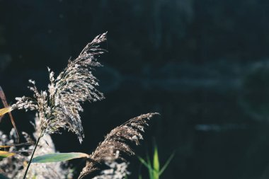 selective focus of plants on dark background in park