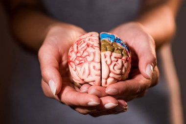 cropped shot of woman holding brain model in hands