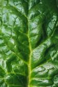 Fotografie Close up of green organic spinach leaf