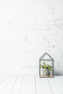 plant in pot on rustic wooden table near white brick wall