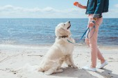 Photo cropped view of woman playing ball with golden retriever on sea shore
