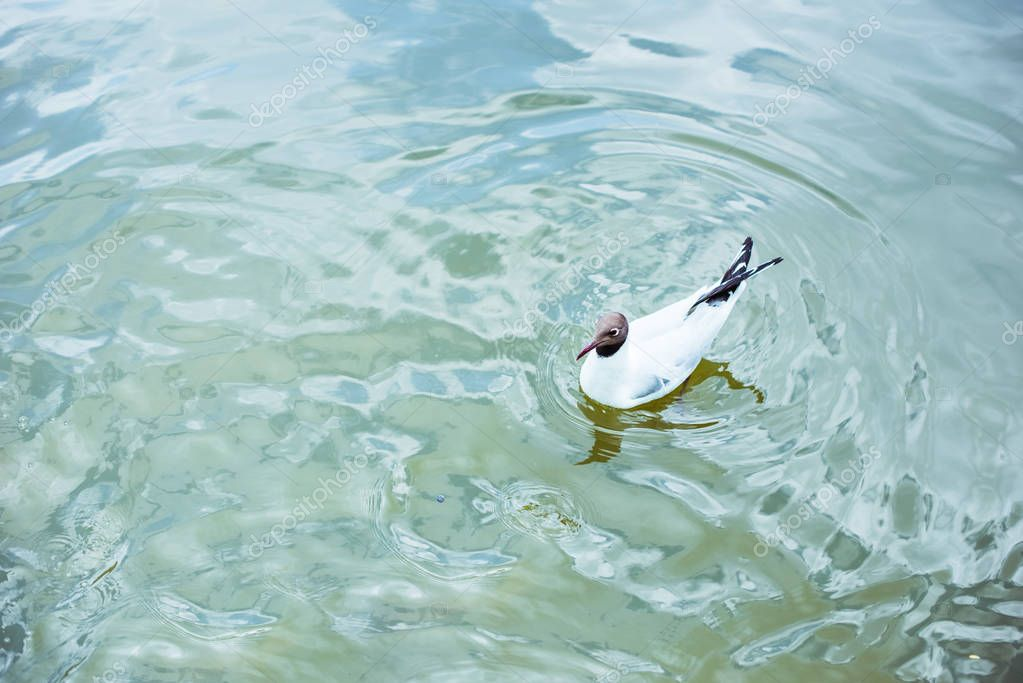 high angle view of lonely seagull swimming in blue pond