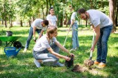 volunteers planting tree in green park together