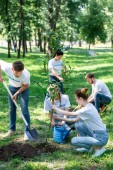 friends volunteering and planting new trees in park together