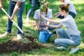 az ifjú önkéntesek új ültetvényt telepíteni a parkban