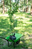 Photo two trees for seedling in wheelbarrow in park