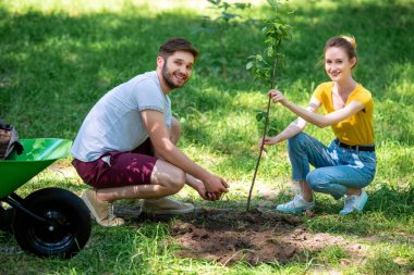 young smiling couple planting new tree in park