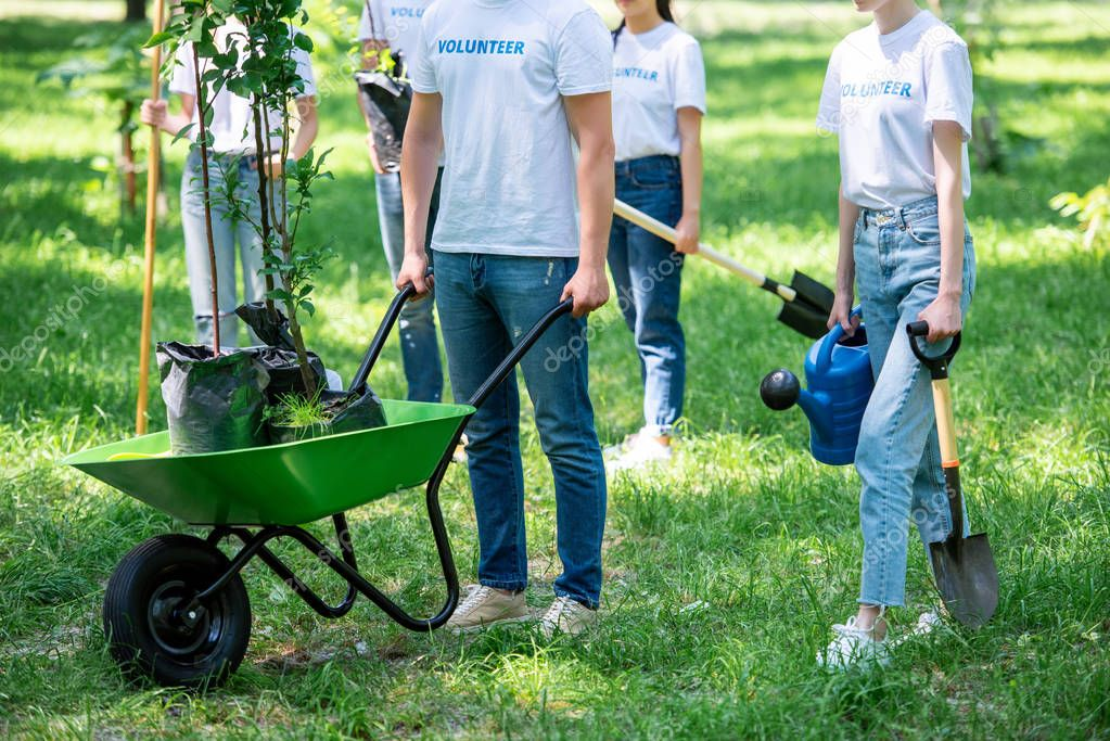 cropped view of volunteers planting trees in green park together