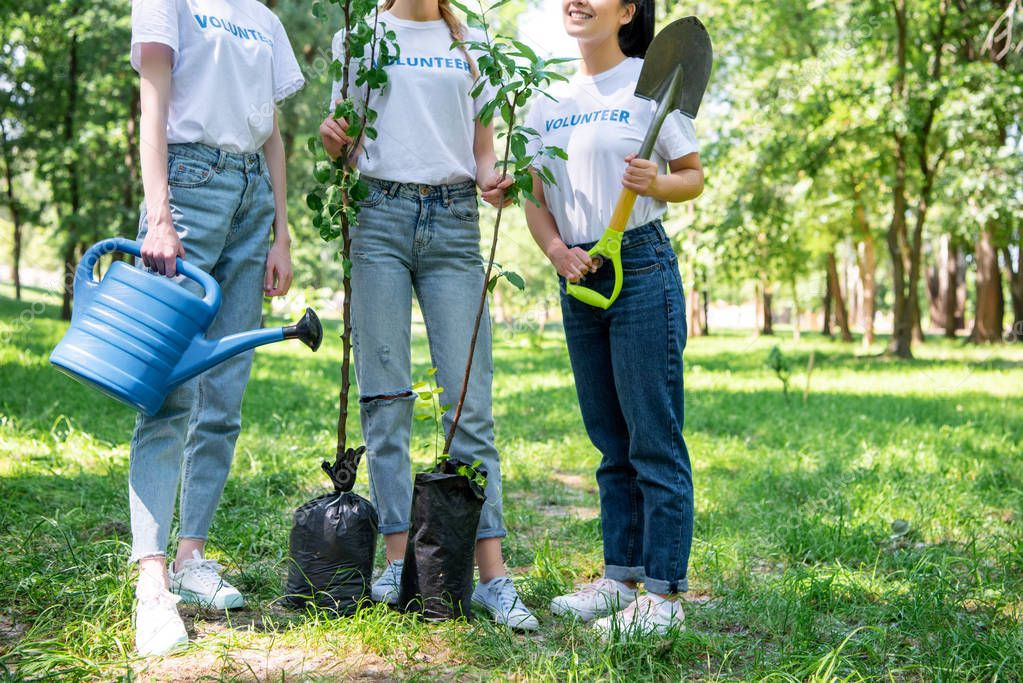 cropped view of girls volunteering and planting trees in park together