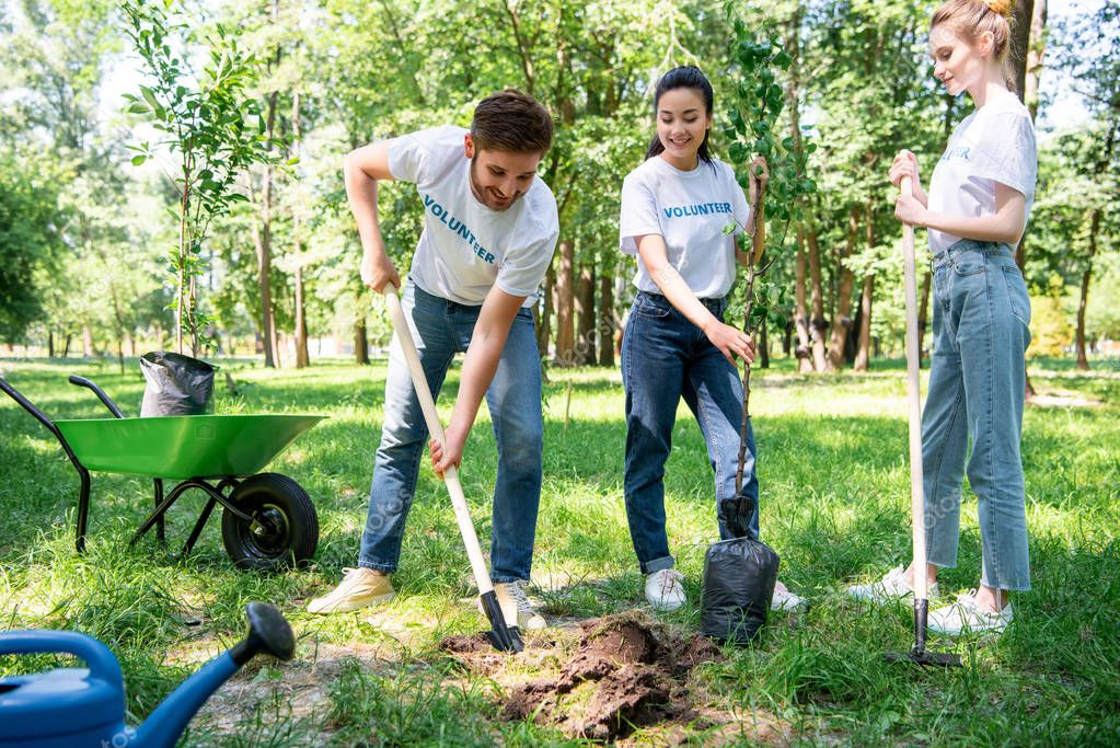 volunteers planting tree with shovel in green park together