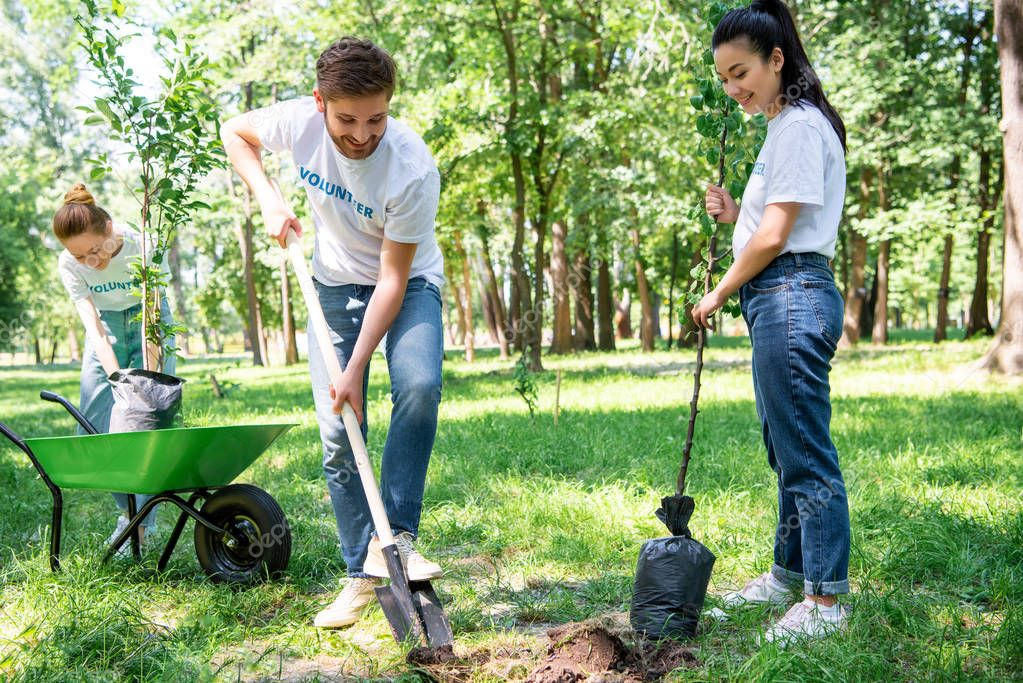 young volunteers planting tree with shovel in park