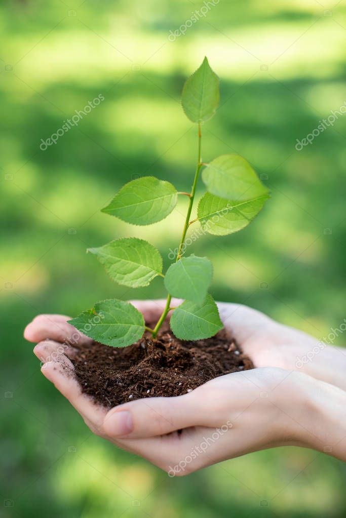cropped view of girl holding soil with sprout in hands