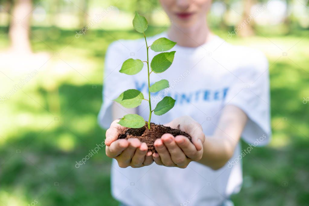 cropped view of volunteer holding ground with seedling in hands