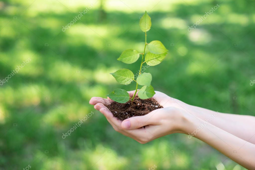 cropped view of woman holding soil with sprout in hands