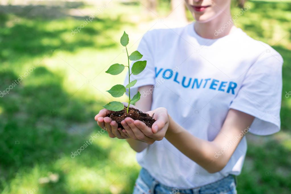 cropped view of female volunteer holding soil with sprout in hands
