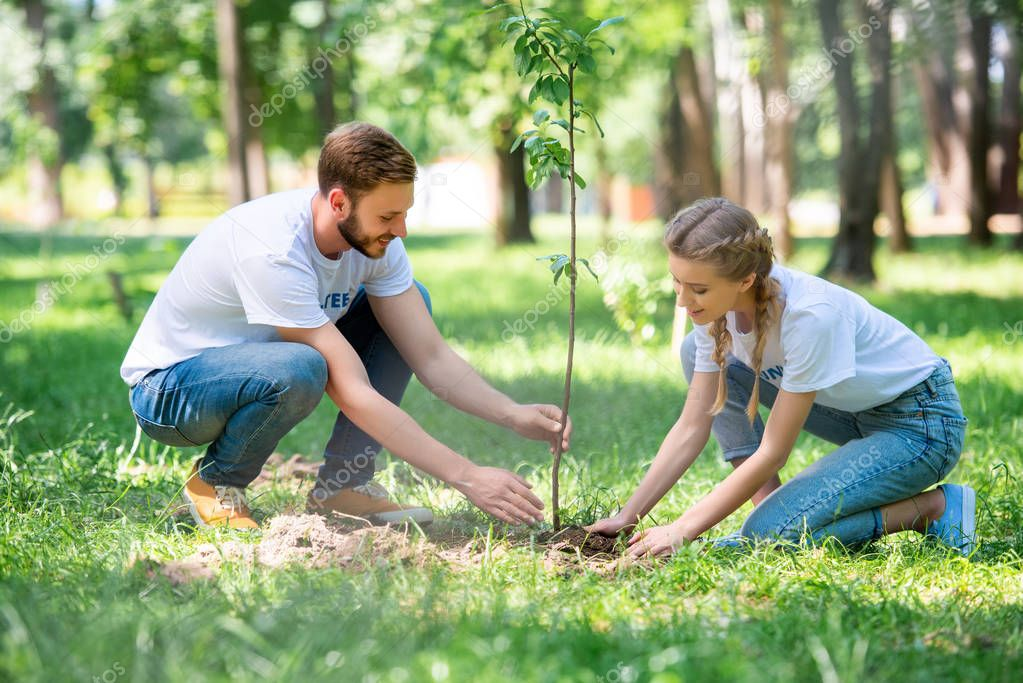 young couple of volunteers planting new tree in park