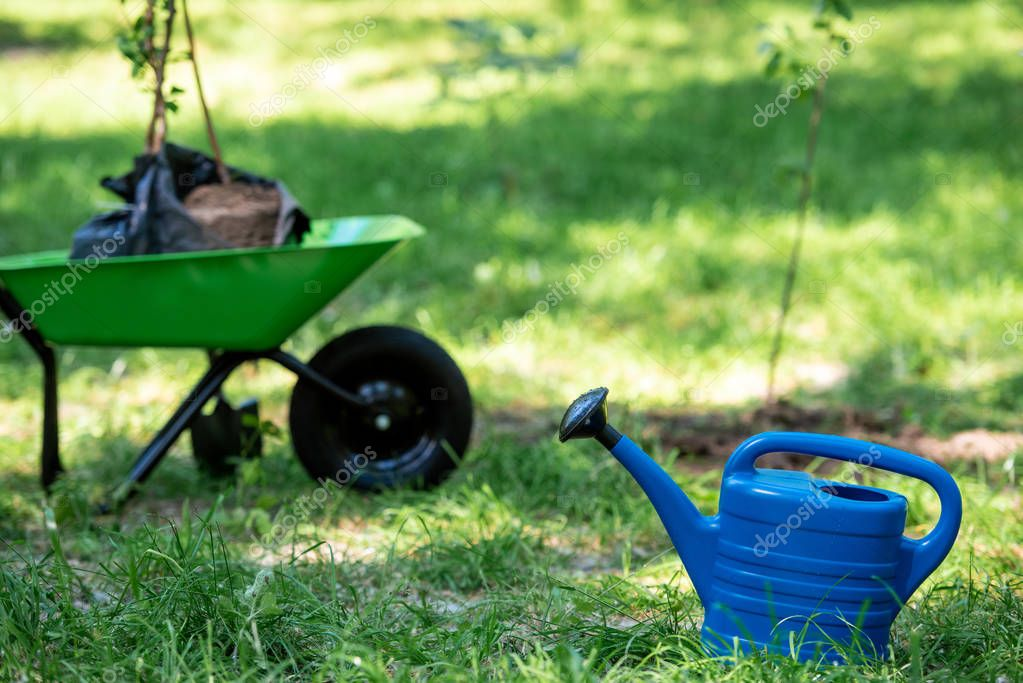 selective focus of watering can in park with new trees in wheelbarrow