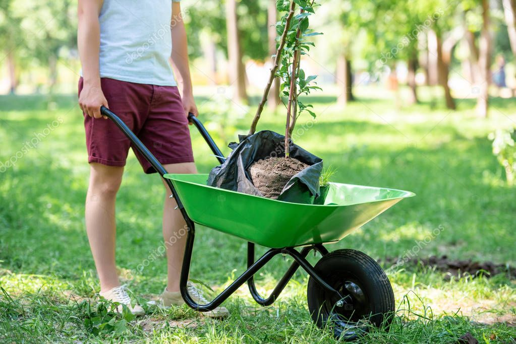 cropped view of man with new trees in wheelbarrow