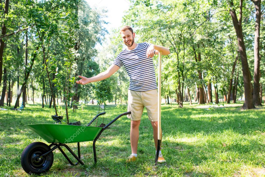 man with wheelbarrow and new trees volunteering in park