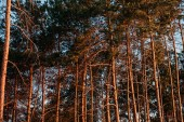 Fotografie scenic view of beautiful tall trees in forest