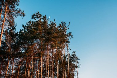 beautiful landscape with tall trees against blue sky at evening
