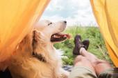 Teilansicht von Tourist im Zelt mit Golden Retriever-Hund auf Wiese