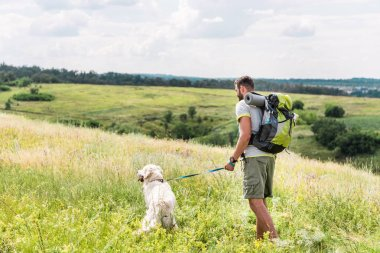 back view of tourist with backpack walking with dog on summer meadow