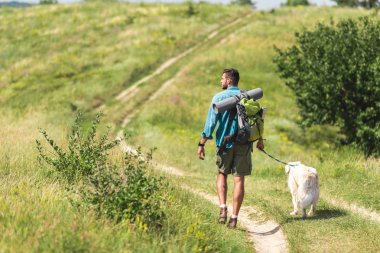 rear view of traveler walking with dog on path on summer meadow