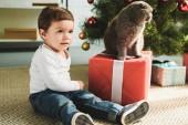 Fotografie roztomilé dítě s skotské klapouché kočky na dárek u vánočního stromu