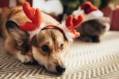 Fotografie Welsh Corgi Hund in Deer Hörner und Katze in Nikolausmütze Weihnachten