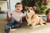 dítě a welsh corgi pes sedící pod vánoční stromeček