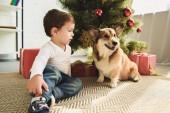 mužské dítě a welsh corgi pes sedící pod vánoční stromeček