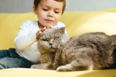 adorable boy petting scottish fold cat and on yellow sofa at home