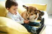 Fotografie rozkošný chlapec seděl na pohovce s kočka a pes