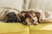 Fotografie kočka a pes ležící pod přehoz na pohovku