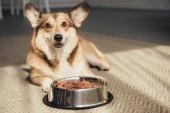 Fotografie pembroke walisischer Corgi liegt mit Schale voller Hundefutter auf dem Boden