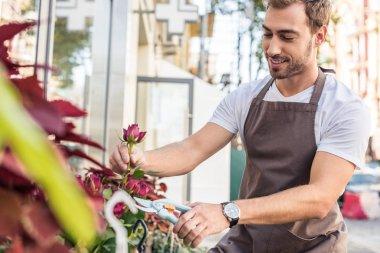 Handsome florist cutting burgundy rose with pruner near flower shop stock vector